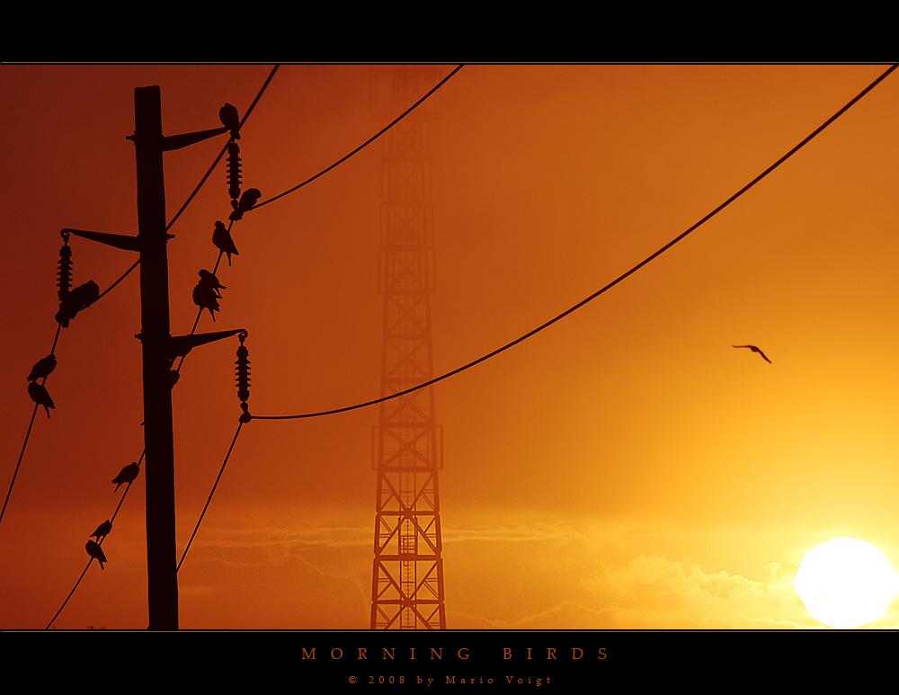 Vögel am Morgen