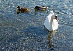 Vögel am See