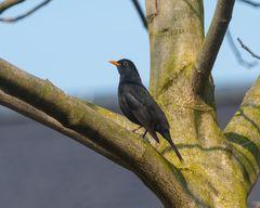 Vögel der Heimat ..B0107755