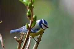 Vögel der Heimat ..DSC_4620