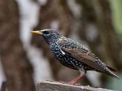 Vögel der Heimat          ..DSC_4634_