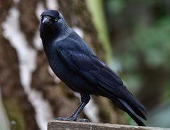 Vögel der Heimat                                .. DSC_4686_