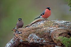 Vögel der Heimat .._DSC4687