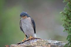 Vögel der Heimat .._DSC4704