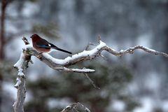 Vögel der Heimat .._DSC4713