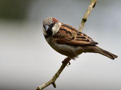 Vögel der  Heimat                 --    SC_4600_1