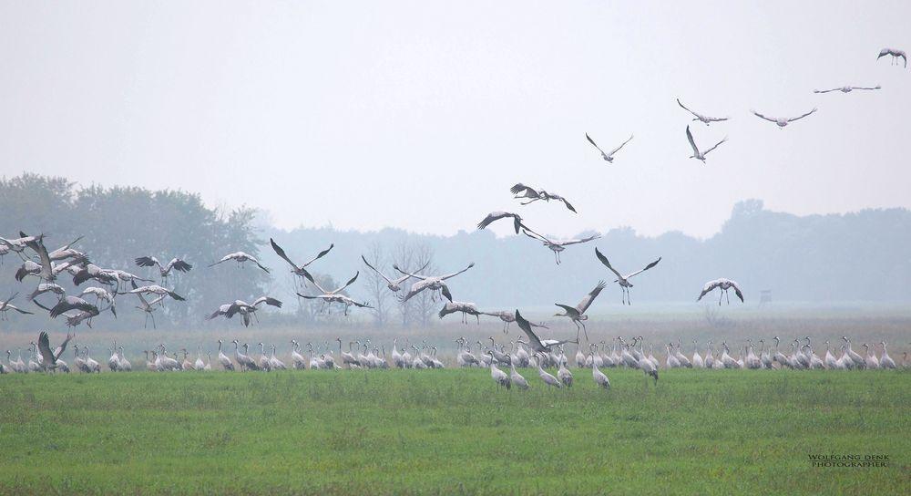 """ Vögel des Glücks """