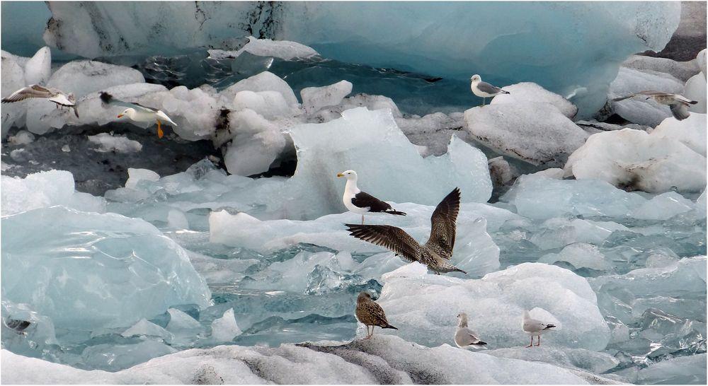 Vögel & Eis
