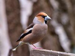 Vögel Europas                                         ...DSC_4637