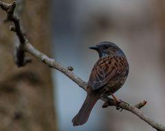 Vögel Europas.DSC_3032