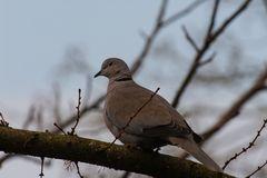 Vögel Europas..DSC_3035