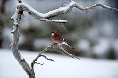 Vögel Europas................DSC4711