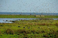 Vögel Hiddensee