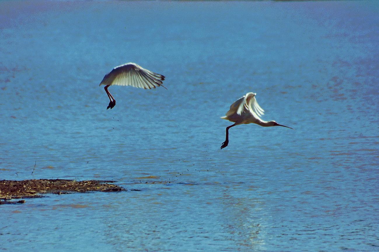 vögel im flug am kariba see in simbabwe foto  bild