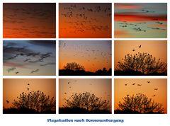 Vögel im Flug mit Langzeitbelichtung