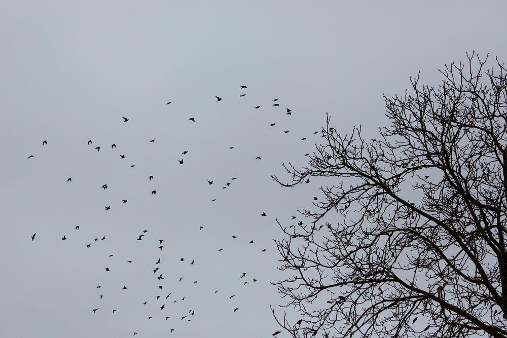 Vögel im November (I)