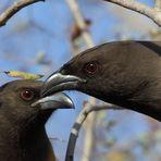 Vögel im Ranthambore Nationalpark, Indien
