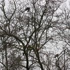 Vögel im Regen im Baum