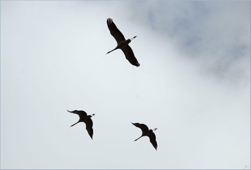 Vögel Silhouetten