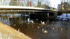 Vögel unter der Brücke