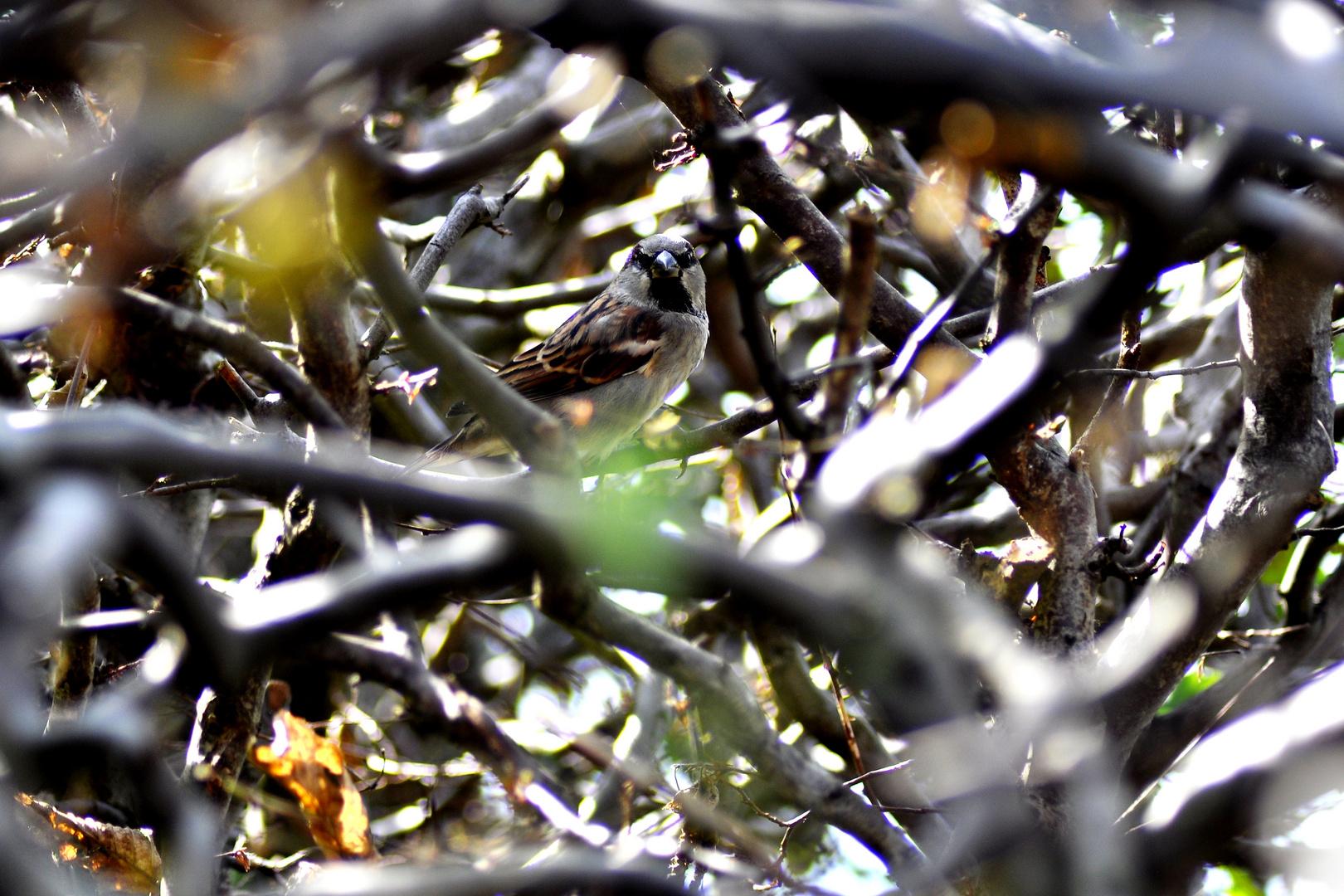 Vögelchen in der Hecke