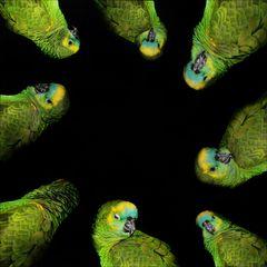 Vögelcommunity