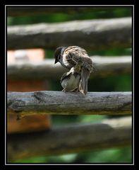 Vögel(n)