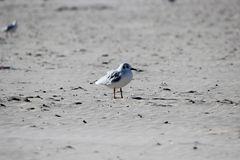 Vogel am Strand von Swinemünde