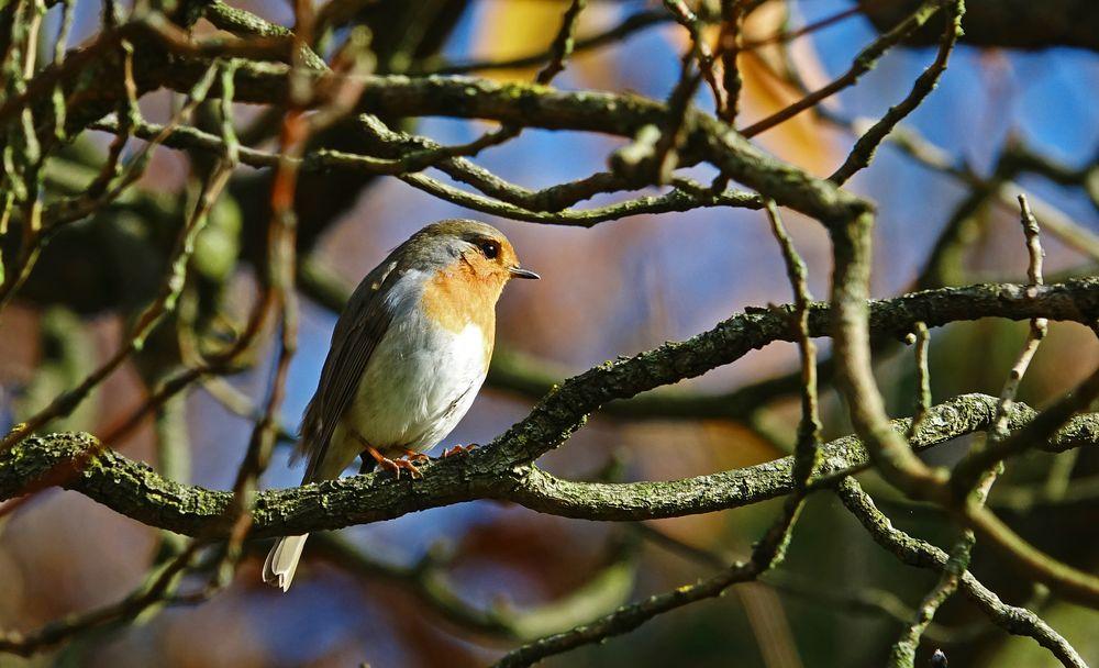 vogel auf dem ast foto  bild  winter natur tiere