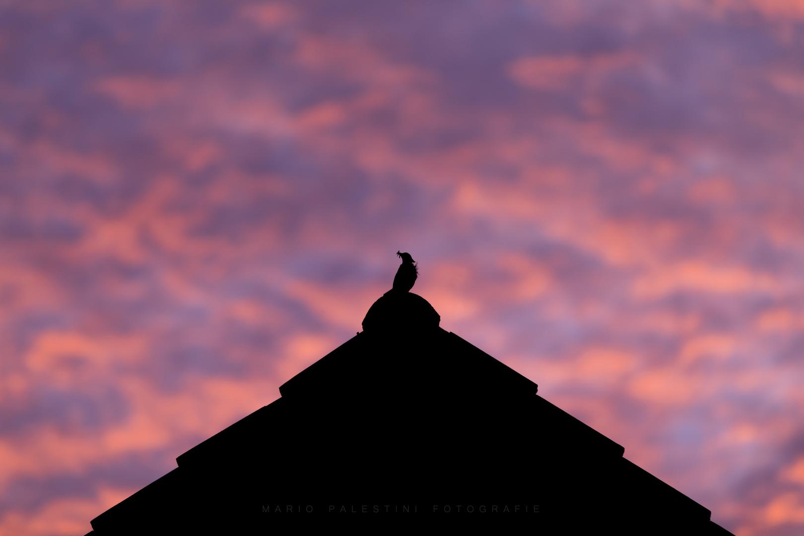 Vogel auf dem Dach im Abendrot beim Abendbrot