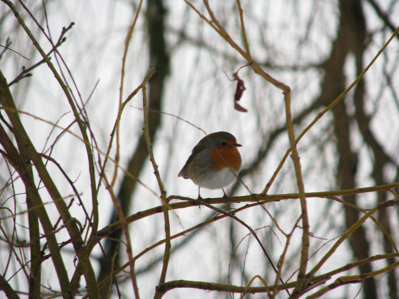vogel auf einem ast foto  bild  tiere wildlife wild