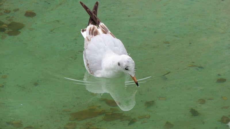Vogel auf grünem Wasser