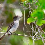 Vogel auf Isla de la juventud