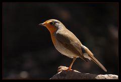 Vogel auf Madeira