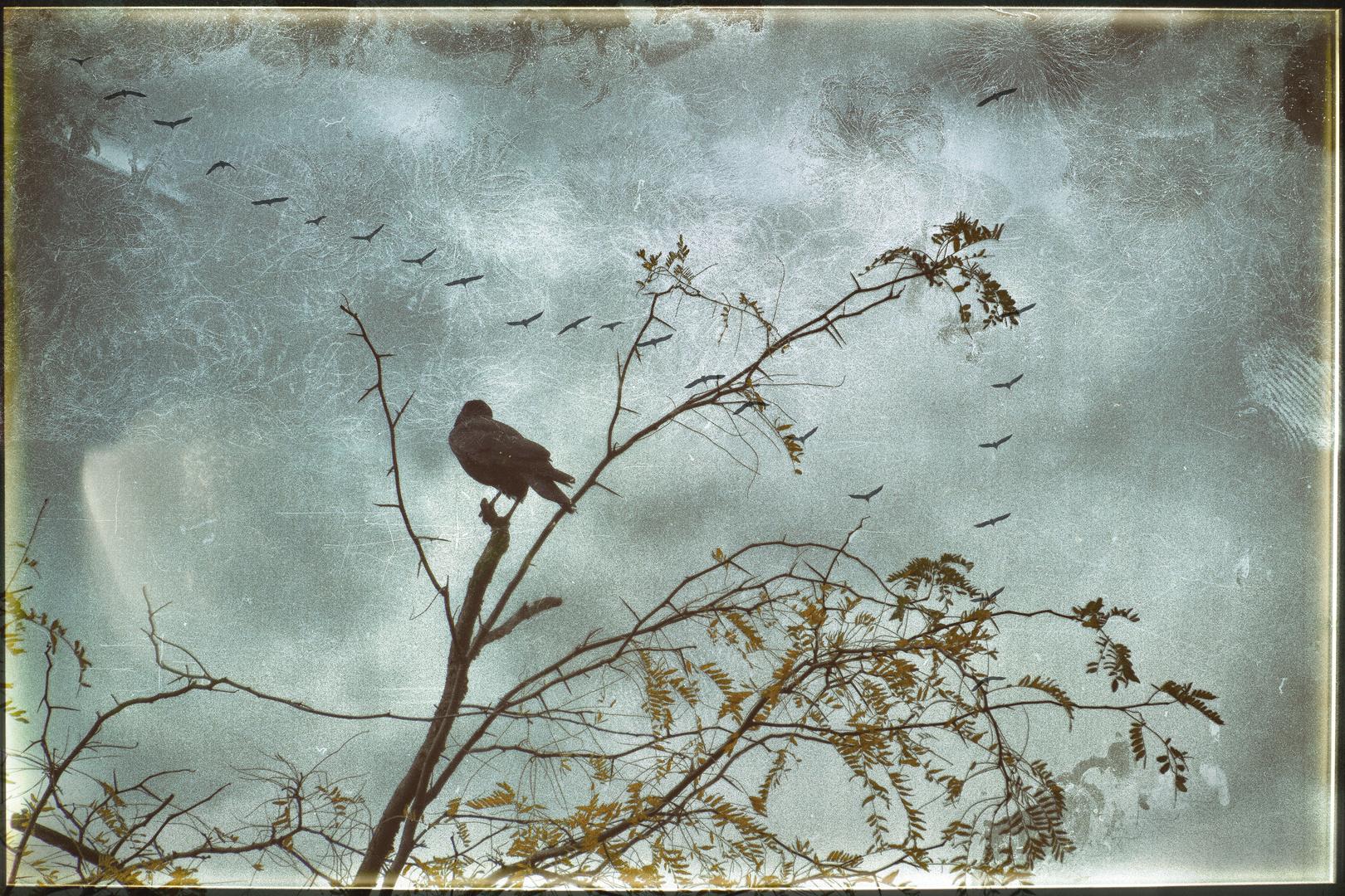 Vogel-Baum