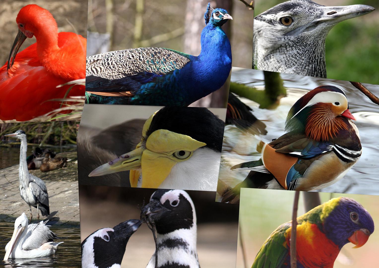 Vogel-Collage 2