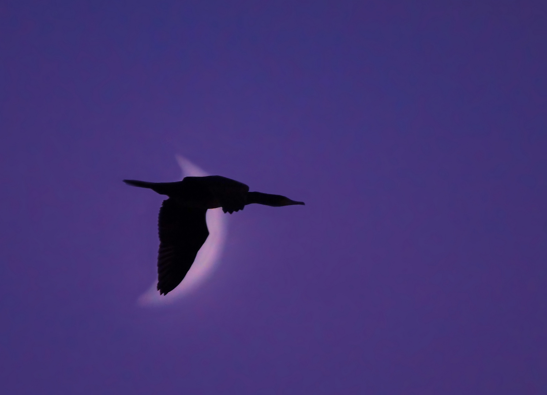Vogel der Nacht...