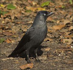Vogel des Jahres 2012...