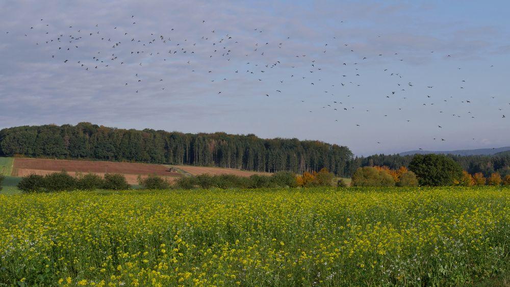 Vogel-Flug