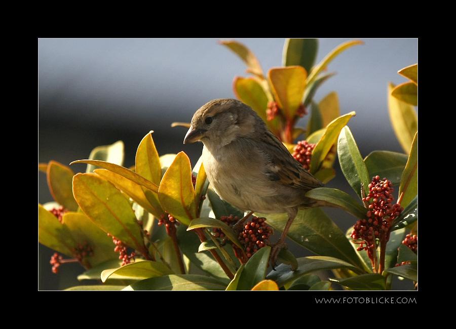 Vogel Haus Treiben #11 Sonne I