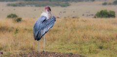 Vogel II, Kenia