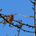 Vogel im Baum