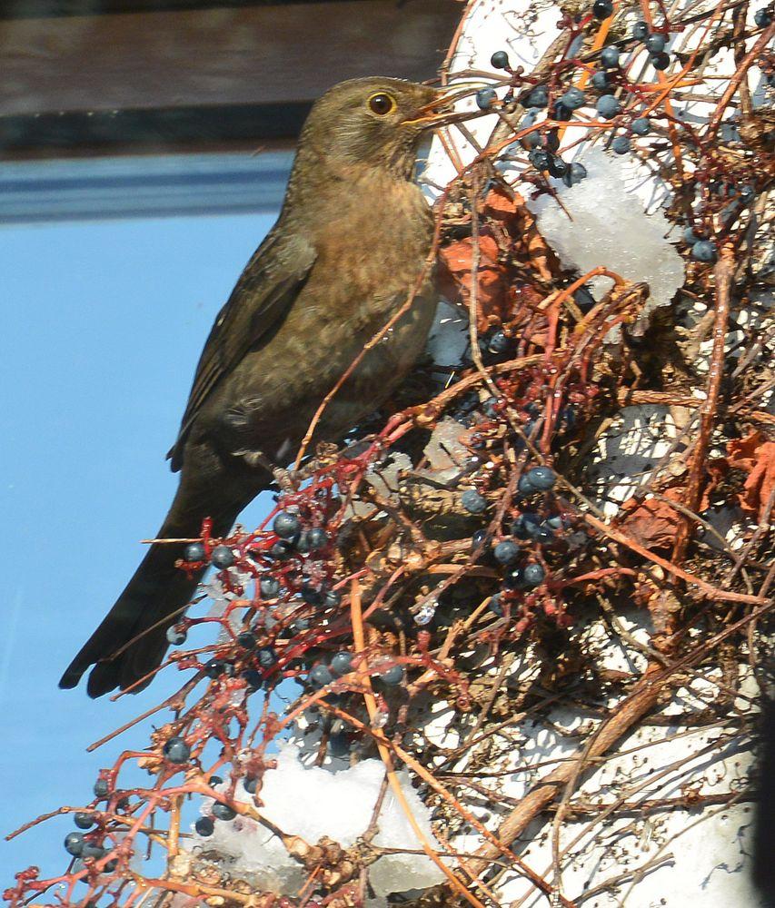 Vogel im Herbst