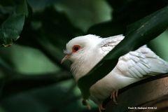 Vogel im Saarbrücker Zoo