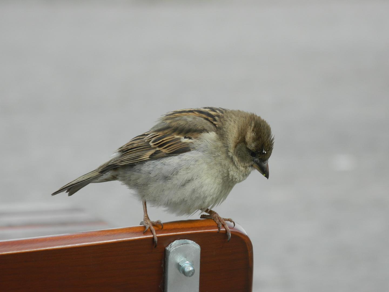 Vogel in Berlin