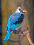 Vogel in blau