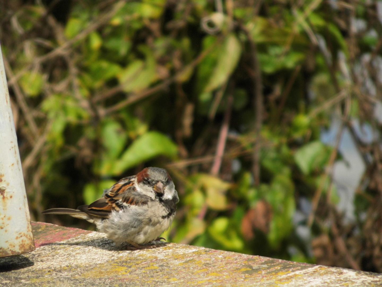 Vogel- Klein und Rund