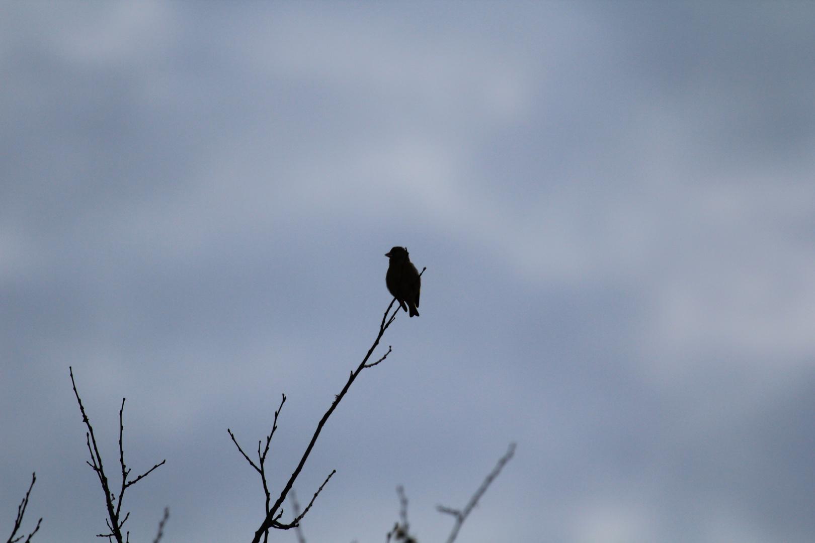 Vogel macht Pause