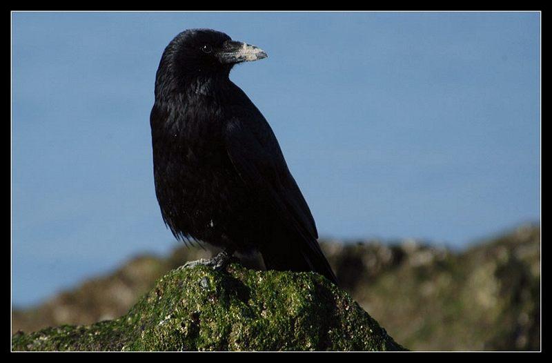 Vogel mit schlechtem Image