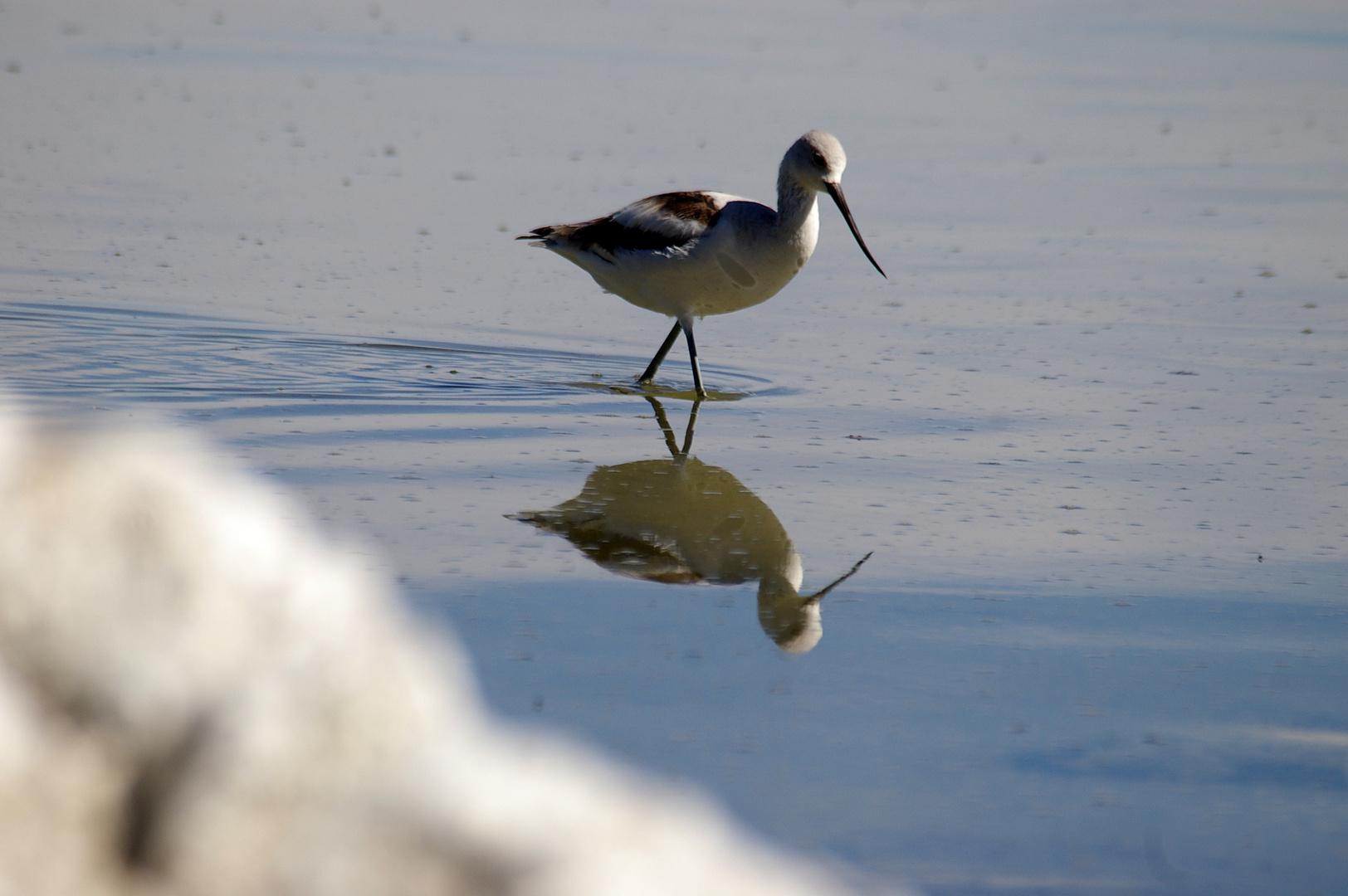 Vogel mit Spiegelung